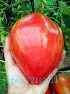 Germination Careful Rare Giant Russian Cabbage Bonsais Vegetable Bonsais 95% High-quality Vegetable For Home Garden 10pcs/bag