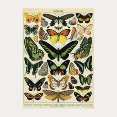 Alfred: Klassisk fin plansje fra Cavallini & Co. med tittelen'Papillons'. Passer enten som innpakningspapir eller kan brukes som plakat på veggen. Produsent:Cavallini & Co.Dimensjoner:70x50cmSpesifikasjon:Trykket på italiensk syrefritt papir