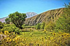 Spring in the Desert! Whitewater Preserve, Arizona, Vineyard, Spring, Outdoor, Outdoors, Vine Yard, Vineyard Vines, Outdoor Games