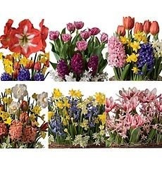 Six Months Bulb Gardens in Holiday 2012 from Wind & Weather on shop.CatalogSpree.com, my personal digital mall.