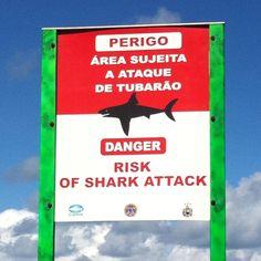 Danger! Shark attack!
