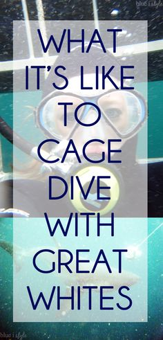 Is diving with Great White Sharks on your bucket list? Read what it's like to cage dive in Flase Bay near Seal Island in South Africa, including lots of photos and video of a 14 foot Great White.