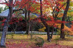 京都の紅葉2015・仁和寺の彩(あや) : 花景色-K.W.C. PhotoBlog