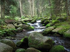 Nature photography River in the Deep Forest