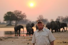 #Sunset #Safari #Zimbabwe #SouthAfrica #Africa #Elephants #DiscoverAfrica #wildlife #travel