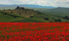 Wandering in Tuscany (by Robyn Hooz)