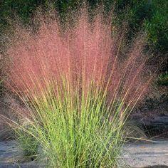 Drought Tolerant Landscape Design Pink Design, Pictures, Remodel, Decor and Ideas
