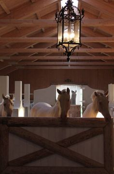 Schloss Amerang: STABLE PHOTOS - PHOTOS STABLE A large stall for weanlings/yearlings http://www.schlossamerang.de/