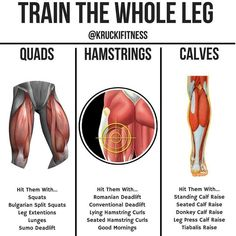 TRAIN THE WHOLE LEGS! For a solid approach to leg day, take this post into account. Pick 2 exercises from each part, and from there choose your sets and reps. If you want the workout to be strength based, work in the rep range. If you want your workou Fitness Workouts, At Home Workouts, Fitness Tips, Fitness Motivation, Mens Fitness, Body Workouts, Ace Fitness, Lifting Motivation, Muscle Fitness