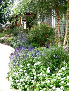 Lavender   impatiens   vinca  small hosta     lovely