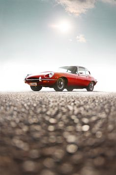 Jaguar in the light of a new day