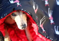REINDEER HOUND BAG - Gone With The Hound - Cute holliday sleeping bag - New Year Greyhound Siberian Tiger, Bengal Tiger, Cute Baby Animals, Wild Animals, Fluffy Dogs, Indian Elephant, Italian Greyhound, Snow Leopard, Sleeping Bag