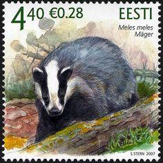 Estonia 2007. Estonian fauna – The Badger # 375-22.03.07. MNH. Estland
