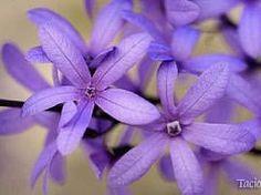 Flor de sao miguel