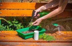 Krok za krokom: Jednoduchý návod, ako získať nové okrasné ihličnany z odrezkov - Pluska.sk