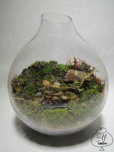 Welcome to Puff Terrariums! At Puff's we create terrariums- they are plants with a contained ecosystem that are easily. Moss Garden, Bottle Garden, Garden Maintenance, Garden Terrarium, Nature Crafts, Gardening Tips, House Plants, Cactus, Succulents