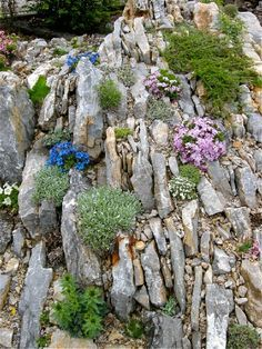 Alpine gardening for hillsides