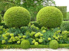 Parc de Sceaux, Hauts-de-Seine, France. www.pariscotejardin.fr.  Amazing chartreuse green- Buxus with Euphorbia characias subsp characias