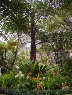 Botanical Gardens, Balboa Park - San Diego, CA.... we went there... so beautiful.