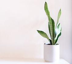 Top 10 Indoor Plants Foliage Plants, Potted Plants, Cactus Plants, Indoor Plants, Mother In Law Tongue, Swiss Cheese Plant, Fertilizer For Plants, Types Of Succulents, Peace Lily