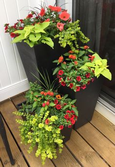 "Image result for 16"" container planting"