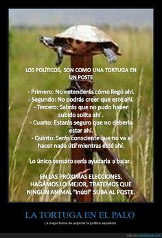 La tortuga en el palo - La mejor forma de explicar la política española   Gracias a http://www.cuantarazon.com/   Si quieres leer la noticia completa visita: http://www.estoy-aburrido.com/la-tortuga-en-el-palo-la-mejor-forma-de-explicar-la-politica-espanola/