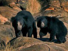 Sanjay-Dubri Wildlife Sanctuary - in Madhya Pradesh, India