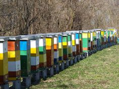 Wish our beehives could be so colorful...maybe next year we will paint them fun colors.