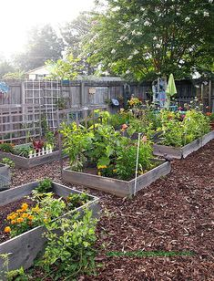 How to Start a Spring Vegetable Garden