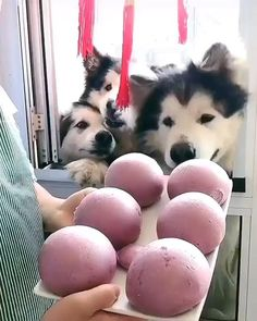 Cute Animal Memes, Cute Animal Videos, Cute Animal Pictures, Cute Funny Animals, Funny Dogs, Funny Humor, Pet Memes, Cute Dogs And Puppies, Doggies