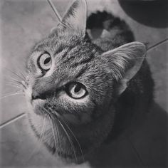 #cat#cats#kitten#kitties#animals#cute #cutecat#catsofinstagram#petsofinstagram#adorable#meow#photooftheday 🐈🐱😻😍🤗💖 Cats And Kittens, Kiss, Cute, Animals, Beautiful, Instagram, Animaux, Kawaii, Animal