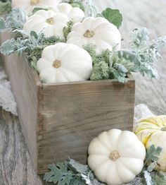 Here's a really easy seasonal fall display and you only need four items to put together a similar look. I started out with a wooden flower box and filled it with mini white pumpkins and Dusty Miller. Finish off with some green moss from Oriental Trading! Thanksgiving Decorations, Seasonal Decor, Holiday Decor, Fall Decorations, Thanksgiving Flowers, Thanksgiving Desserts, Fall Home Decor, Autumn Home, Muñeca Diy