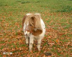 It's not a puppy but I want a mini horse and I'm sure Chloe would be happy enough with it