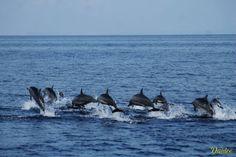 Dolphin & Whale Watching in Pamilacan Island, Bohol Chocolate Hills, Travel Journal Scrapbook, Visayas, Mindanao, Bohol, Tourist Information, Whale Watching, Cebu, Dolphins
