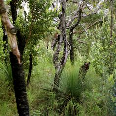There is something about the Australian bush that helps me to feel so content Australian Garden Design, Australian Bush, Australia Living, Back Gardens, Tasmania, Rivers, Lakes, Blessings, January