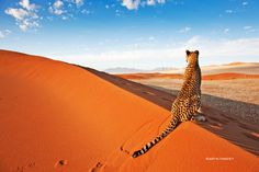 Travel Guide To Namibia - Things To Do And Places To Stay