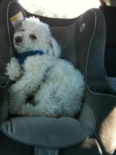 My spoiled baby....actually rides in the car seat. He doesn't look too happy though.... gotta give it to him, he is all kinds of cute.