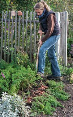 Bodenverbesserung - Geräte, Tipps Und Tricks Bodenverbesserung Garten Mittel Tipps