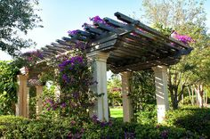 Picture Perfect Pergola Photograph by Maria Keady
