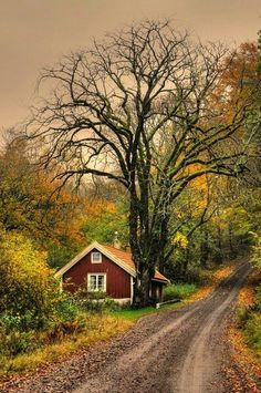 I want to live here secluded cottage