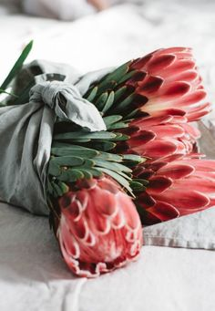Aimee Marks, Albert Park VIC Protea- grows in the colors of red, pink, white and green.