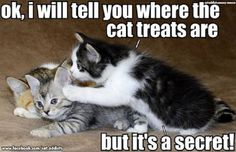 it's a secret Funny Animals With Captions, Funny Animal Memes, Funny Cat Pictures, Cat Memes, Funny Cats, Animal Humor, Animal Pictures, Kittens Cutest, Cats And Kittens