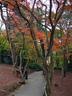 Autumn, Shizuoka, Japan Copyright: Irina Babanova