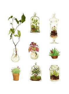 cy-lindric: Plants in glass and pots, Eugène's thing.