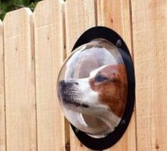 Awesome idea! Will need to get some of these if we ever get to fence in our back yard!