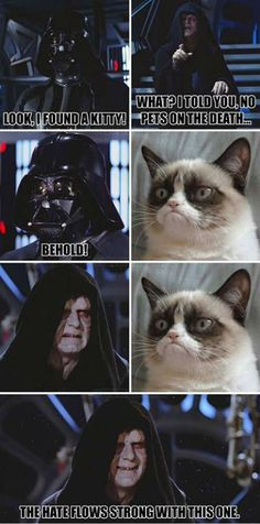 Grumpy cat darth vader, Grumpy cat star wars, grumpy cat funny, grumpy cat humor ...For the funniest memes and hilarious jokes visit www.bestfunnyjokes4u.com/lol-funny-cat-pic/