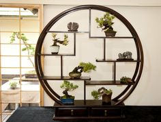 Circular shohin bonsai display