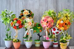 Topiaries, Peaches and Minis on Pinterest