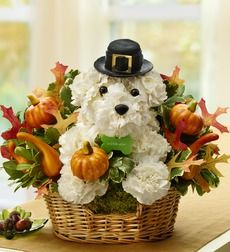 Cute Pilgrim pup made out of flowers!
