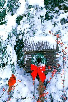 Cardinal on holly branch. Mini wreath on birdhouse.